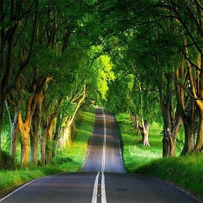 تور جنگل گیسوم تابستان ۹۹
