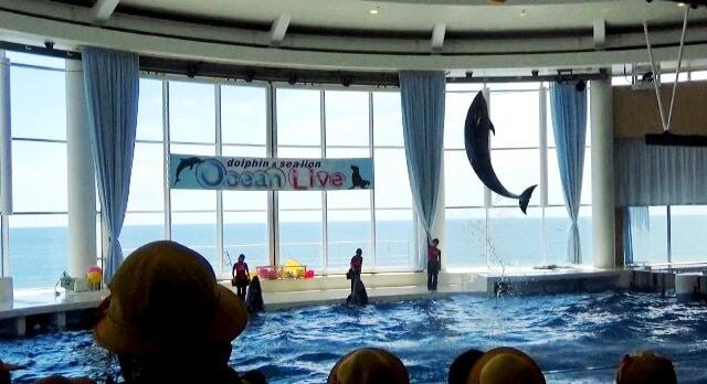 アクアワールド茨城県大洗水族館で迫力のイルカ・アシカ・ペンギンショー
