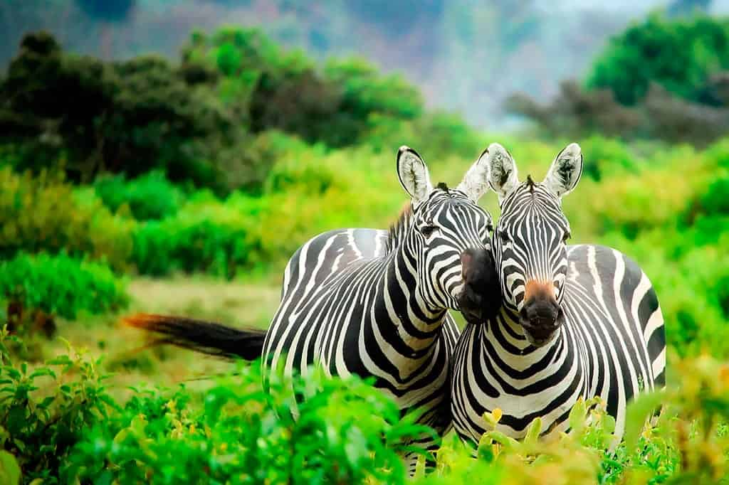 kenya safaris tours