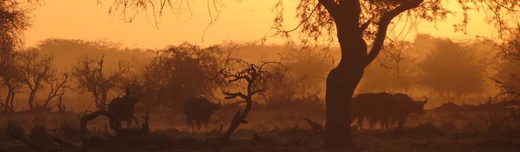 chad safari and tours