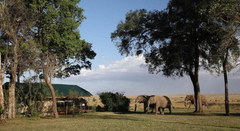 Governors' Camp View With Elephants