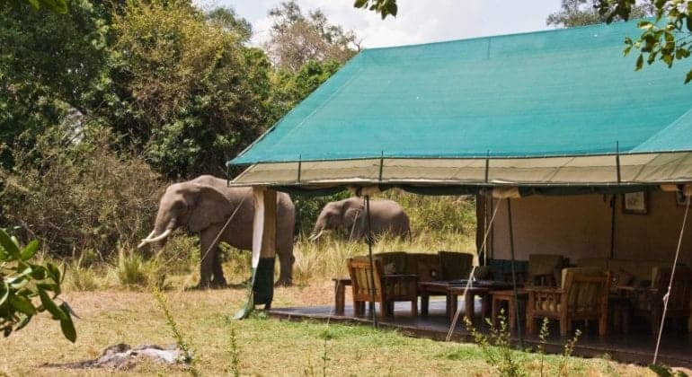 Governors' Private Camp Tent With Elephants