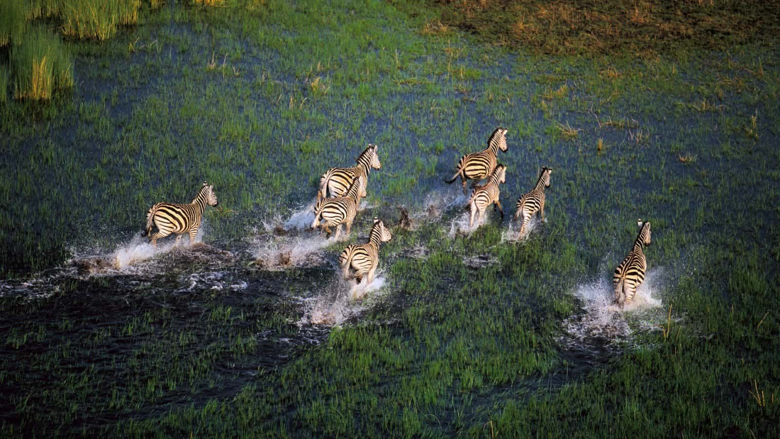 Wildlife In Okavango Delta