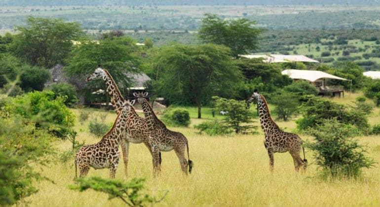 Mara Bushtops Wildlife