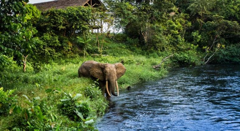 Mboko Camp View With Elephant