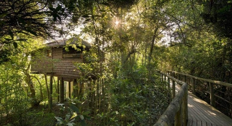 Tsala Treetop Lodge Broadwalk