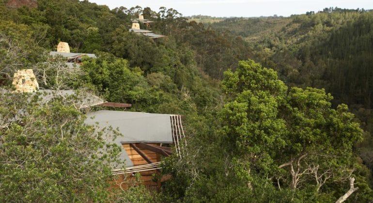 Tsala Treetop Lodge Canopy View