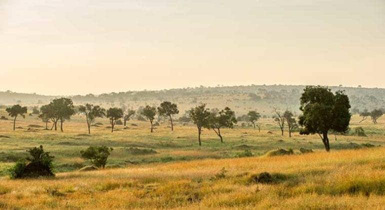 Mara Mara Tented Lodge Landscape