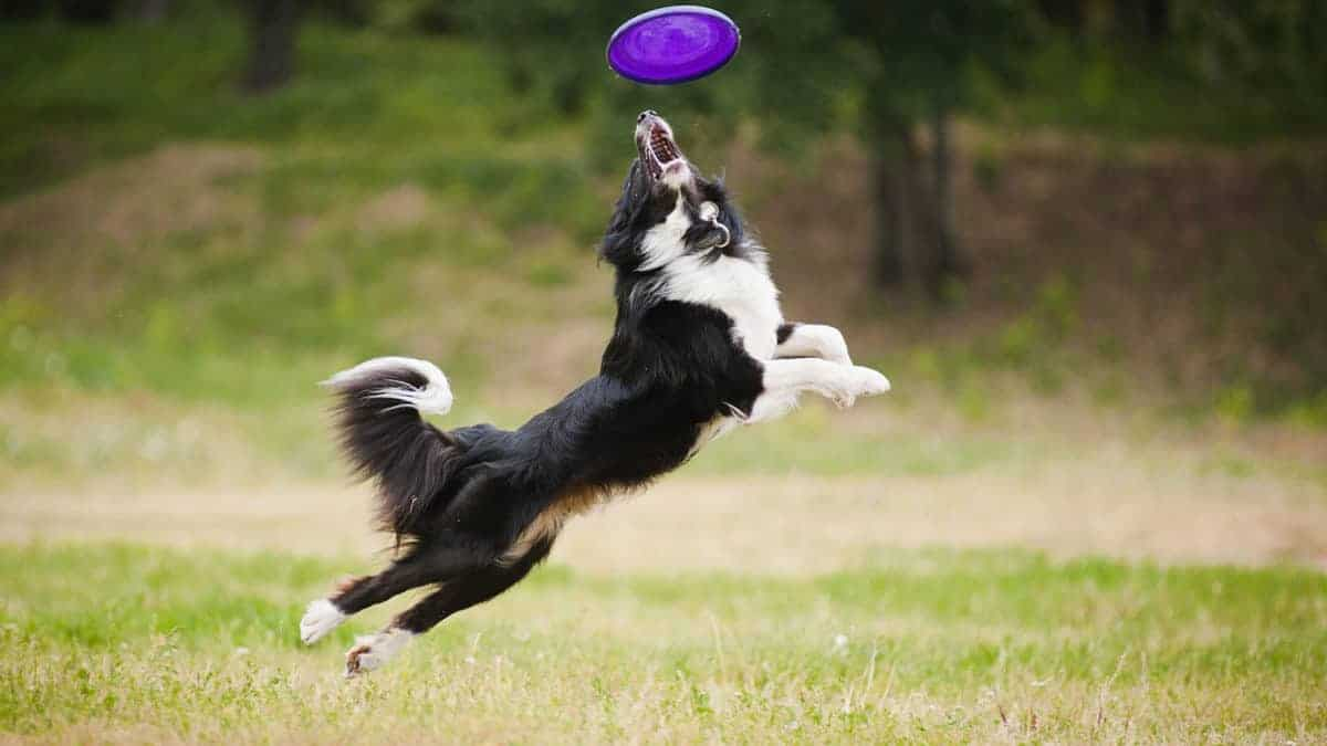Ten Ways to Tire Out an Active Dog