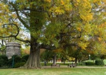 Google Launches AI powered Tree Canopy Lab