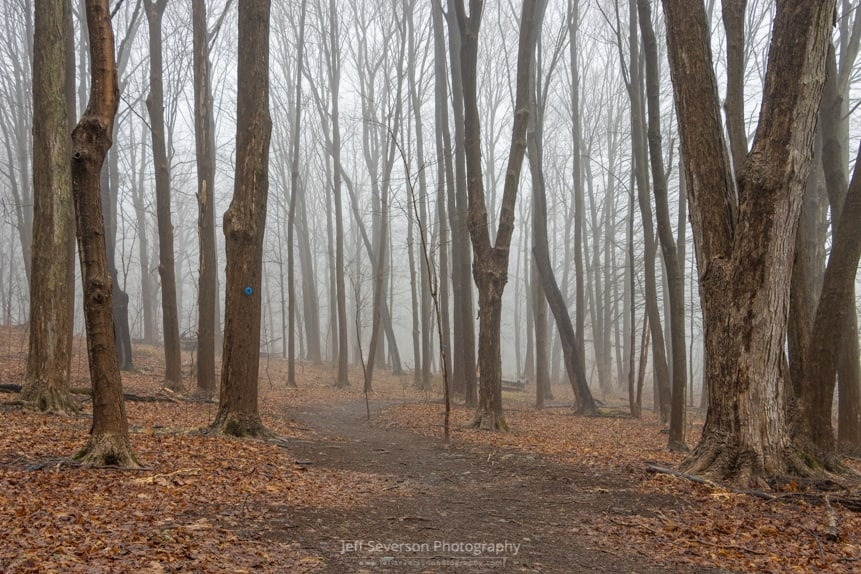 A photo of fog filled forest on a rainy March evening at Esopus Meadows Preserve in Ulster Park.
