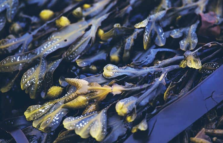 Treating Cellulite With Bladderwrack: Does It Work? - Beauty