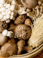 6 Best Mushrooms for Immune Health