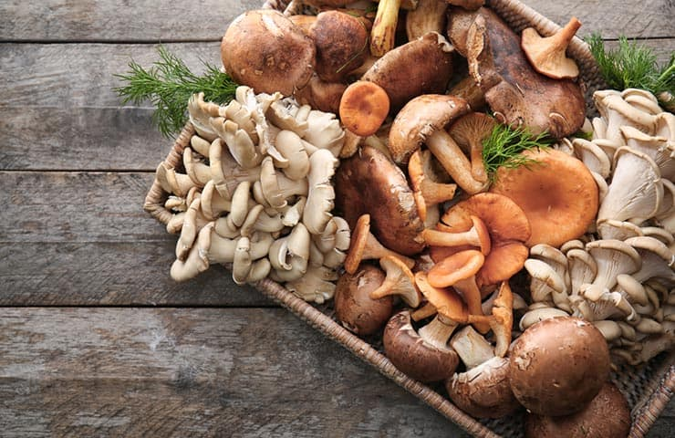 Immunity boosting mushrooms