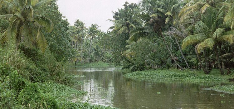 Boat trip to the backwaters