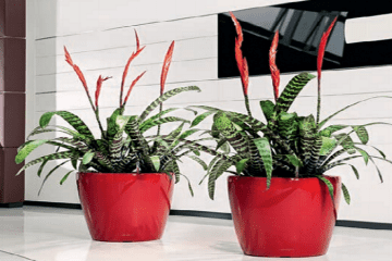 Plant Displays and plants