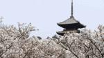 京都 vol.4 地域ブランド・商標登録