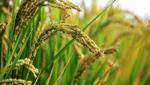 商標登録insideNews: 種苗法改正 生産現場への周知必要 JAcom 農業協同組合新聞