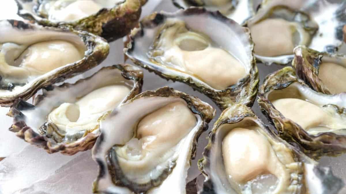 East Coast Oysters