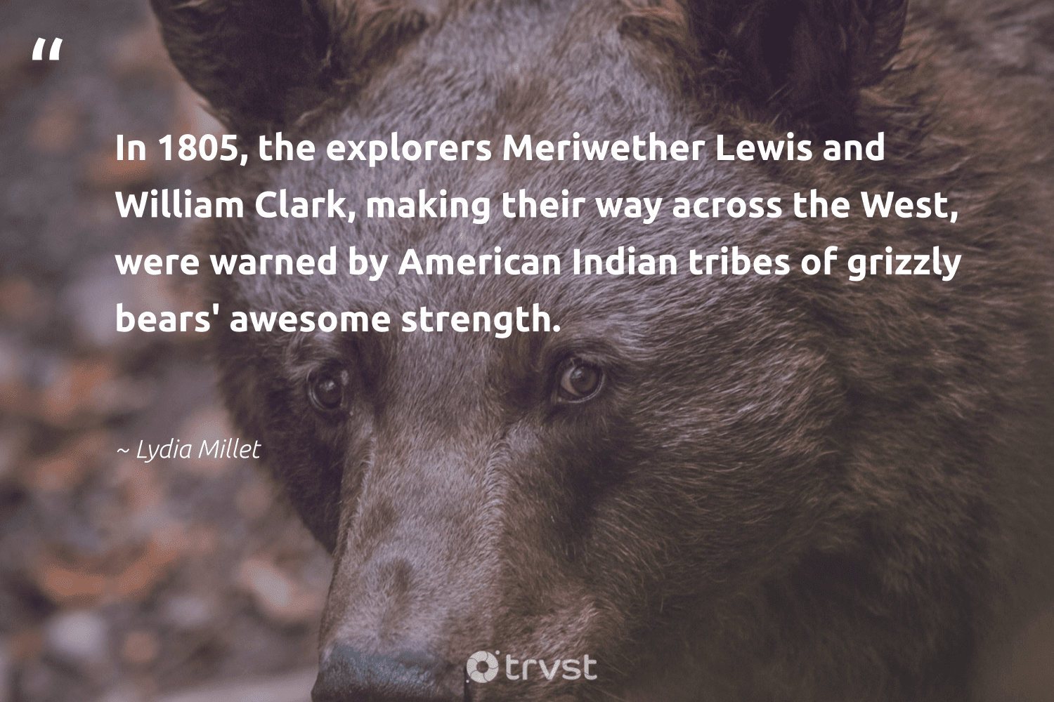 """""""In 1805, the explorers Meriwether Lewis and William Clark, making their way across the West, were warned by American Indian tribes of grizzly bears' awesome strength.""""  - Lydia Millet #trvst #quotes #bears #biodiversity #beinspired #conservation #socialchange #sustainability #ecoconscious #splendidanimals #bethechange #wild"""
