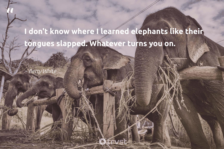 """I don't know where I learned elephants like their tongues slapped. Whatever turns you on.""  - Betty White #trvst #quotes #elephants #elephant #dotherightthing #elephantlover #dosomething #wildgeography #impact #naturelovers #thinkgreen #savetheelephants"