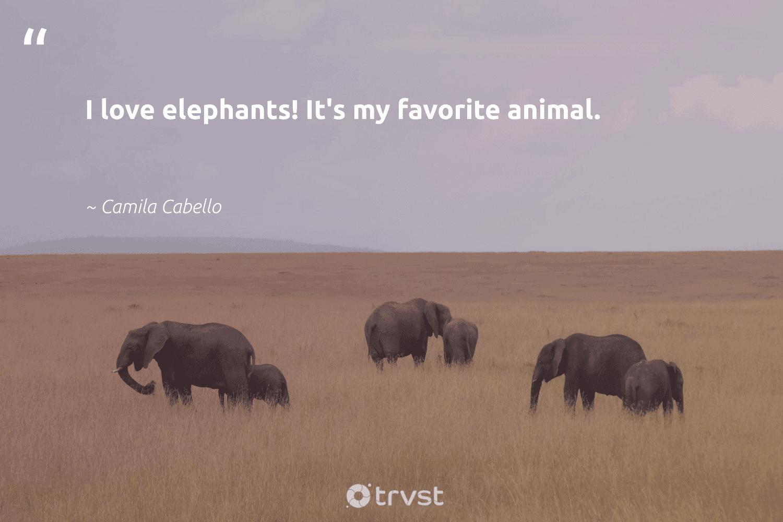 """I love elephants! It's my favorite animal.""  - Camila Cabello #trvst #quotes #love #animal #animals #elephantlover #nature #dotherightthing #wildlife #naturelovers #biology #socialchange"