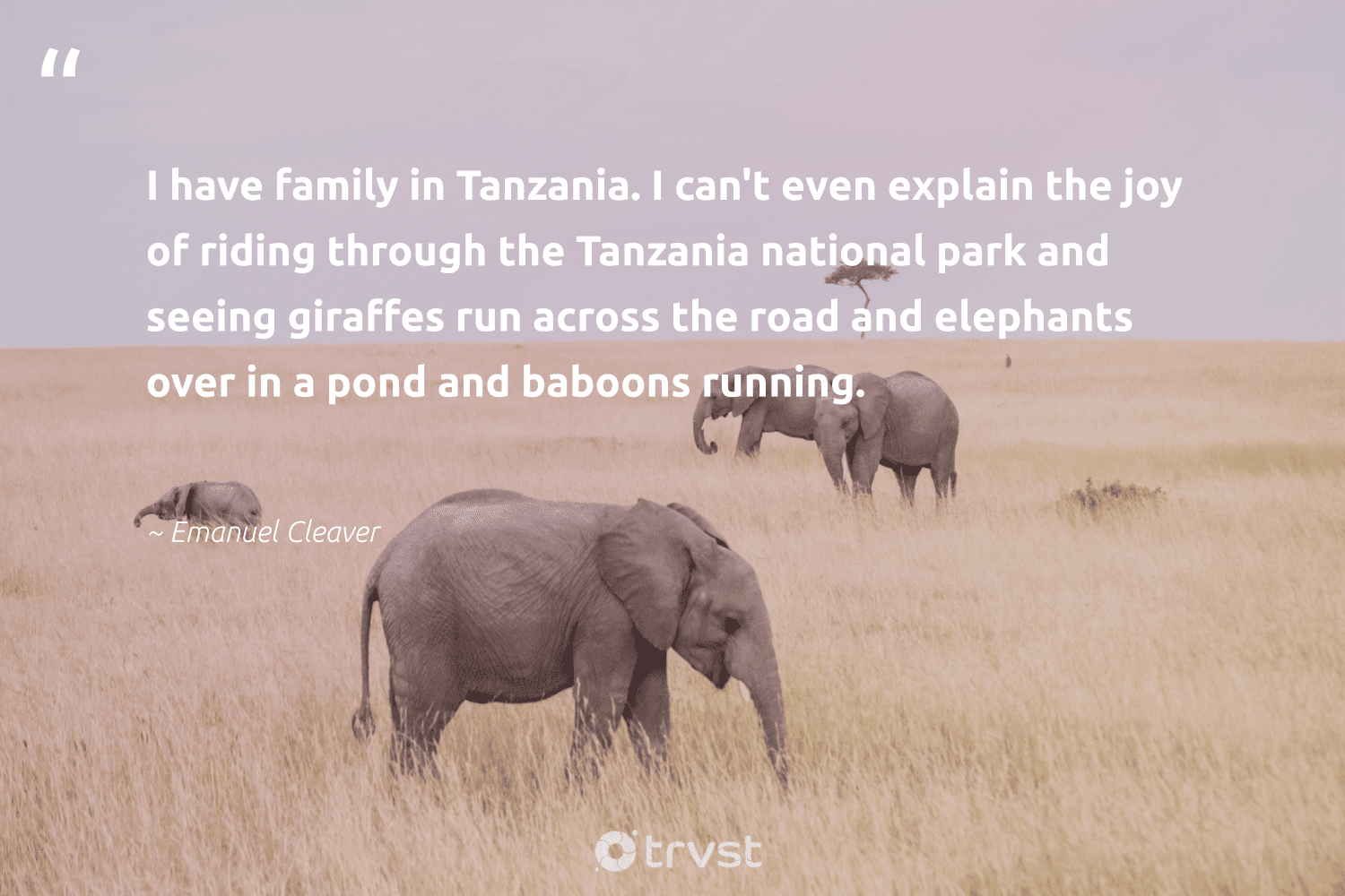 """""""I have family in Tanzania. I can't even explain the joy of riding through the Tanzania national park and seeing giraffes run across the road and elephants over in a pond and baboons running.""""  - Emanuel Cleaver #trvst #quotes #family #elephants #wildgeography #ecoconscious #animals #thinkgreen #savetheelephants #socialchange #wildanimals #dotherightthing"""