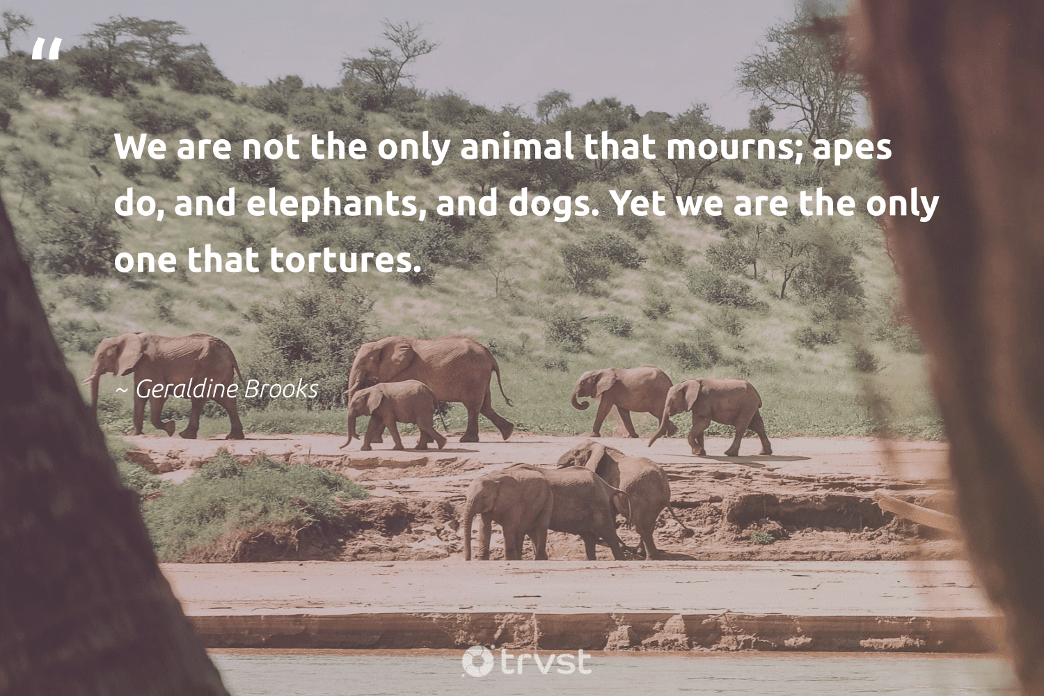 """""""We are not the only animal that mourns; apes do, and elephants, and dogs. Yet we are the only one that tortures.""""  - Geraldine Brooks #trvst #quotes #animal #elephants #wildlife #naturelovers #biology #collectiveaction #animallovers #elephant #forscience #socialchange"""