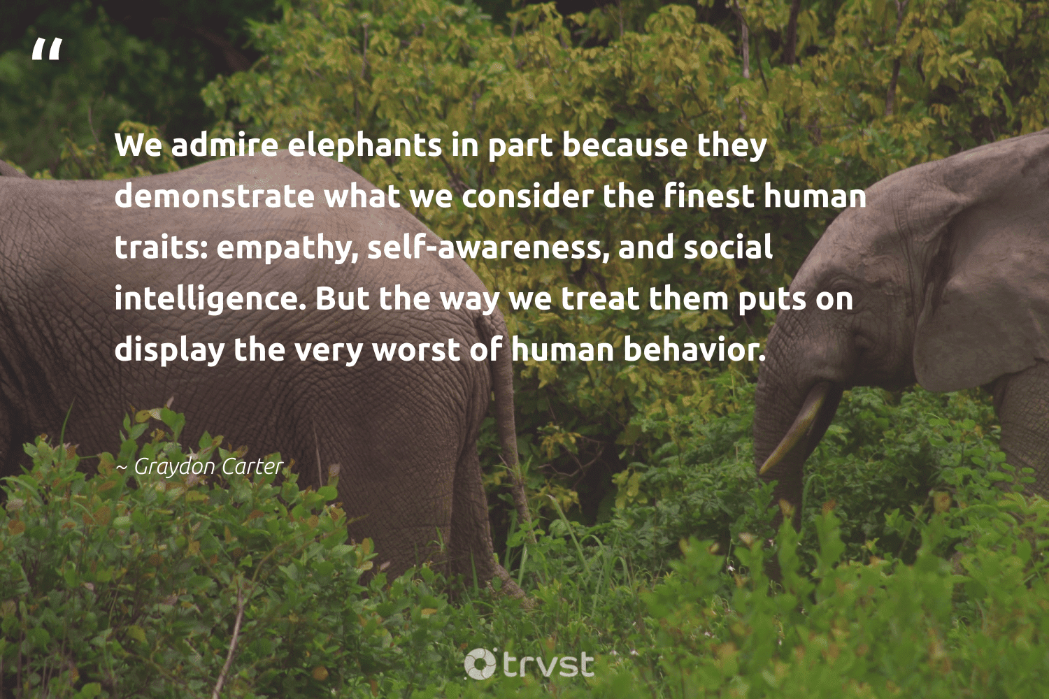 """""""We admire elephants in part because they demonstrate what we consider the finest human traits: empathy, self-awareness, and social intelligence. But the way we treat them puts on display the very worst of human behavior.""""  - Graydon Carter #trvst #quotes #elephants #naturelovers #collectiveaction #elephantlove #dotherightthing #endangeredspecies #bethechange #conservation #takeaction #wildgeography"""