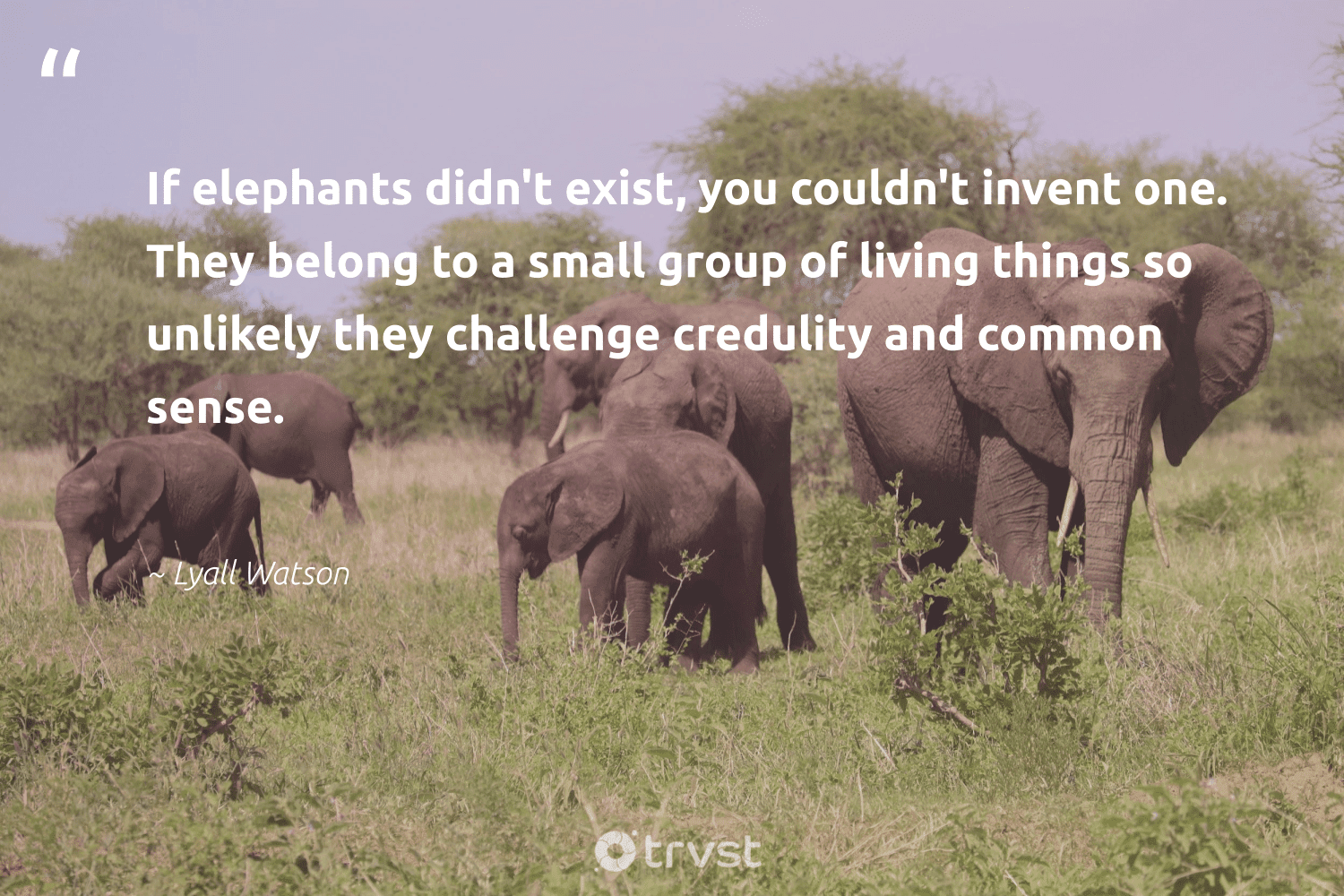 """""""If elephants didn't exist, you couldn't invent one. They belong to a small group of living things so unlikely they challenge credulity and common sense.""""  - Lyall Watson #trvst #quotes #elephants #wildanimals #changetheworld #naturelovers #socialchange #wildlife #collectiveaction #mammals #bethechange #elephant"""