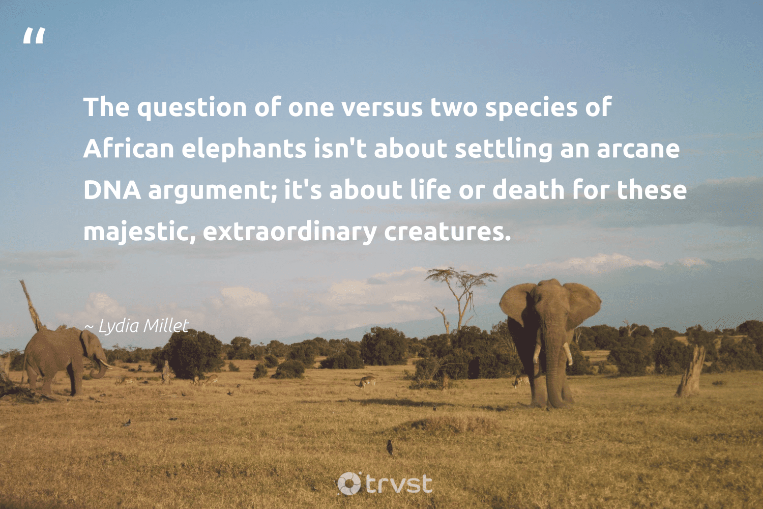 """""""The question of one versus two species of African elephants isn't about settling an arcane DNA argument; it's about life or death for these majestic, extraordinary creatures.""""  - Lydia Millet #trvst #quotes #elephants #naturelovers #dogood #wildlife #socialchange #elephant #beinspired #mammals #bethechange #wildgeography"""