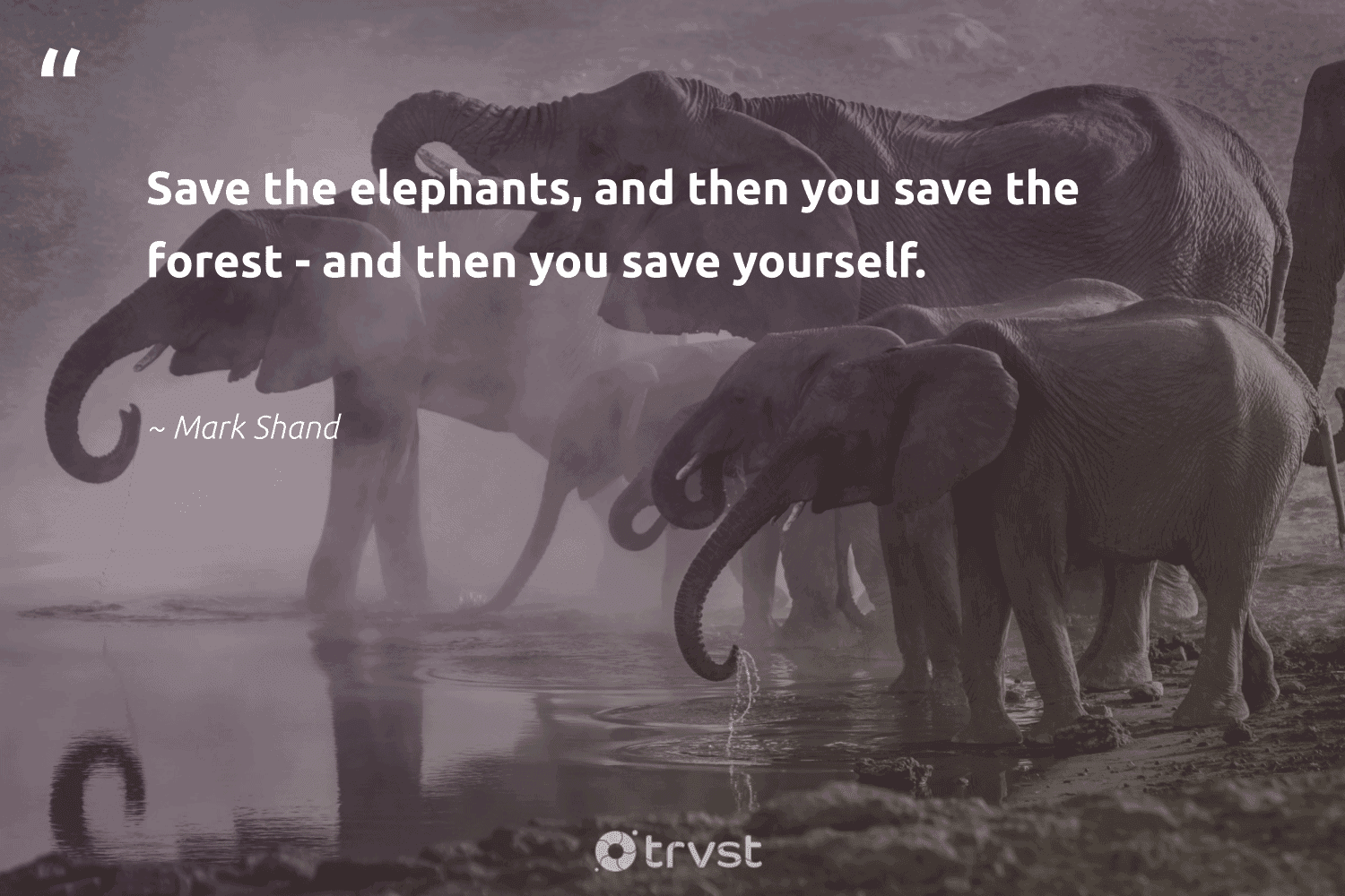 """""""Save the elephants, and then you save the forest - and then you save yourself.""""  - Mark Shand #trvst #quotes #forest #elephants #savetheelephants #deforestation #explore #earth #bethechange #arborarmy #conservation #climatechange"""