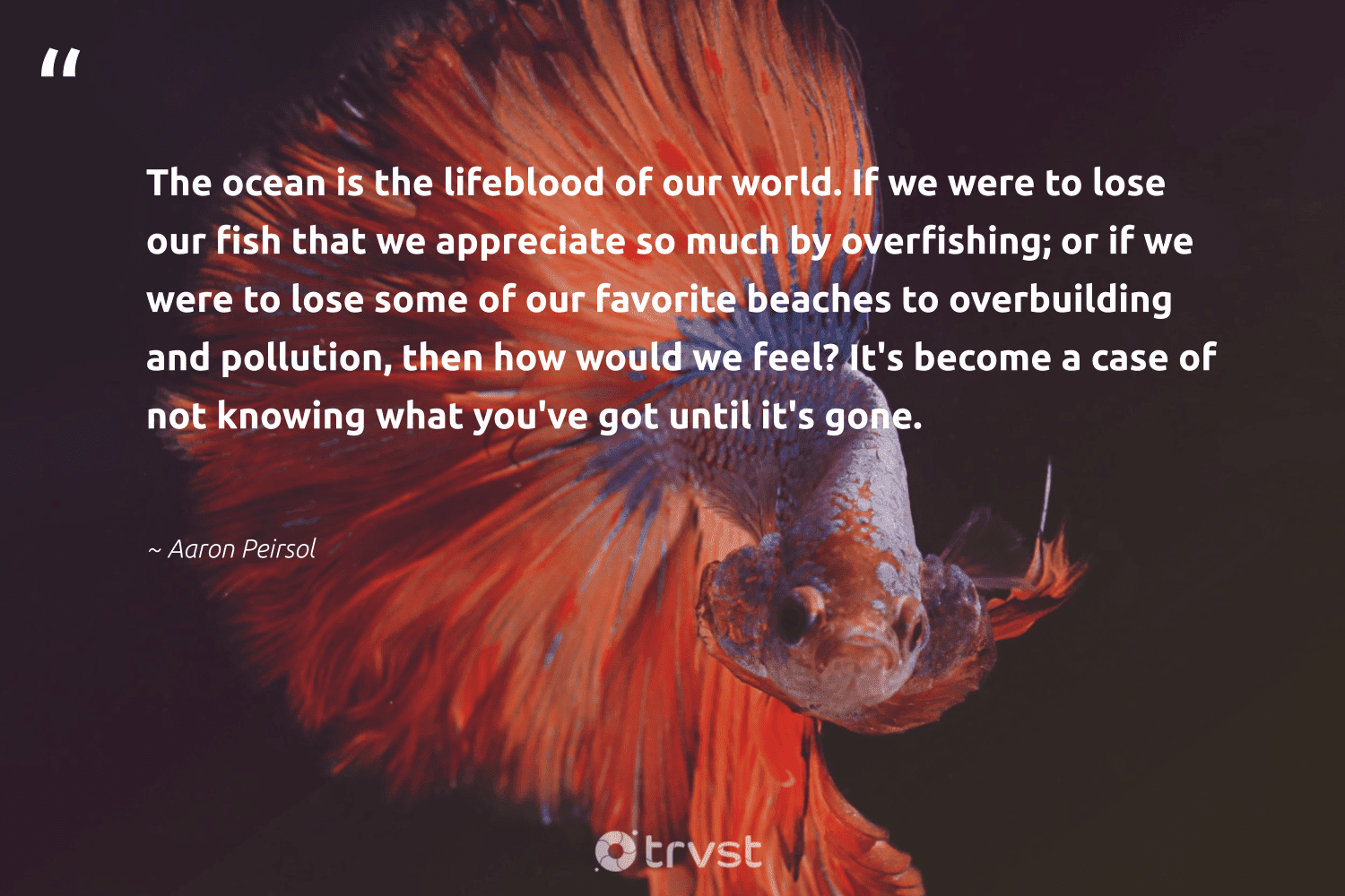 """""""The ocean is the lifeblood of our world. If we were to lose our fish that we appreciate so much by overfishing; or if we were to lose some of our favorite beaches to overbuilding and pollution, then how would we feel? It's become a case of not knowing what you've got until it's gone.""""  - Aaron Peirsol #trvst #quotes #pollution #ocean #fish #pollute #sealife #wildlifeplanet #bethechange #toxic #wildlifeprotection #natureseekers"""