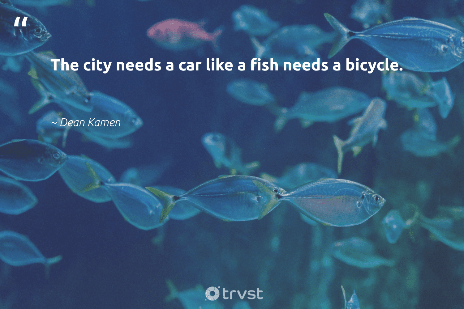 """""""The city needs a car like a fish needs a bicycle.""""  - Dean Kamen #trvst #quotes #fish #biodiversity #dotherightthing #oceans #dosomething #protecttheoceans #socialchange #wildlifeprotection #planetearthfirst #marinelife"""