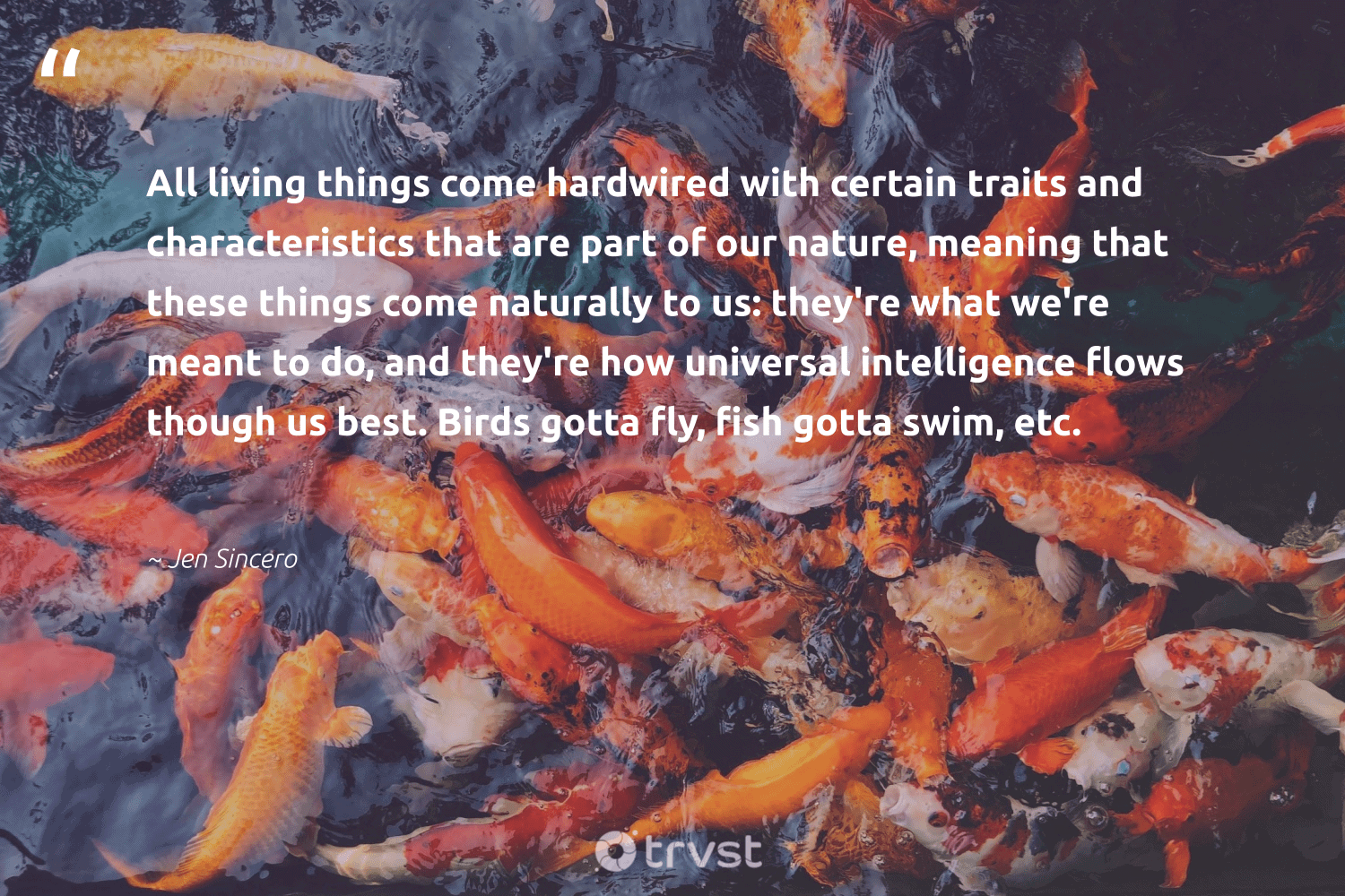 """""""All living things come hardwired with certain traits and characteristics that are part of our nature, meaning that these things come naturally to us: they're what we're meant to do, and they're how universal intelligence flows though us best. Birds gotta fly, fish gotta swim, etc.""""  - Jen Sincero #trvst #quotes #nature #fish #birds #planet #protecttheoceans #wildlifeplanet #planetearthfirst #environment #marinelife #earth"""