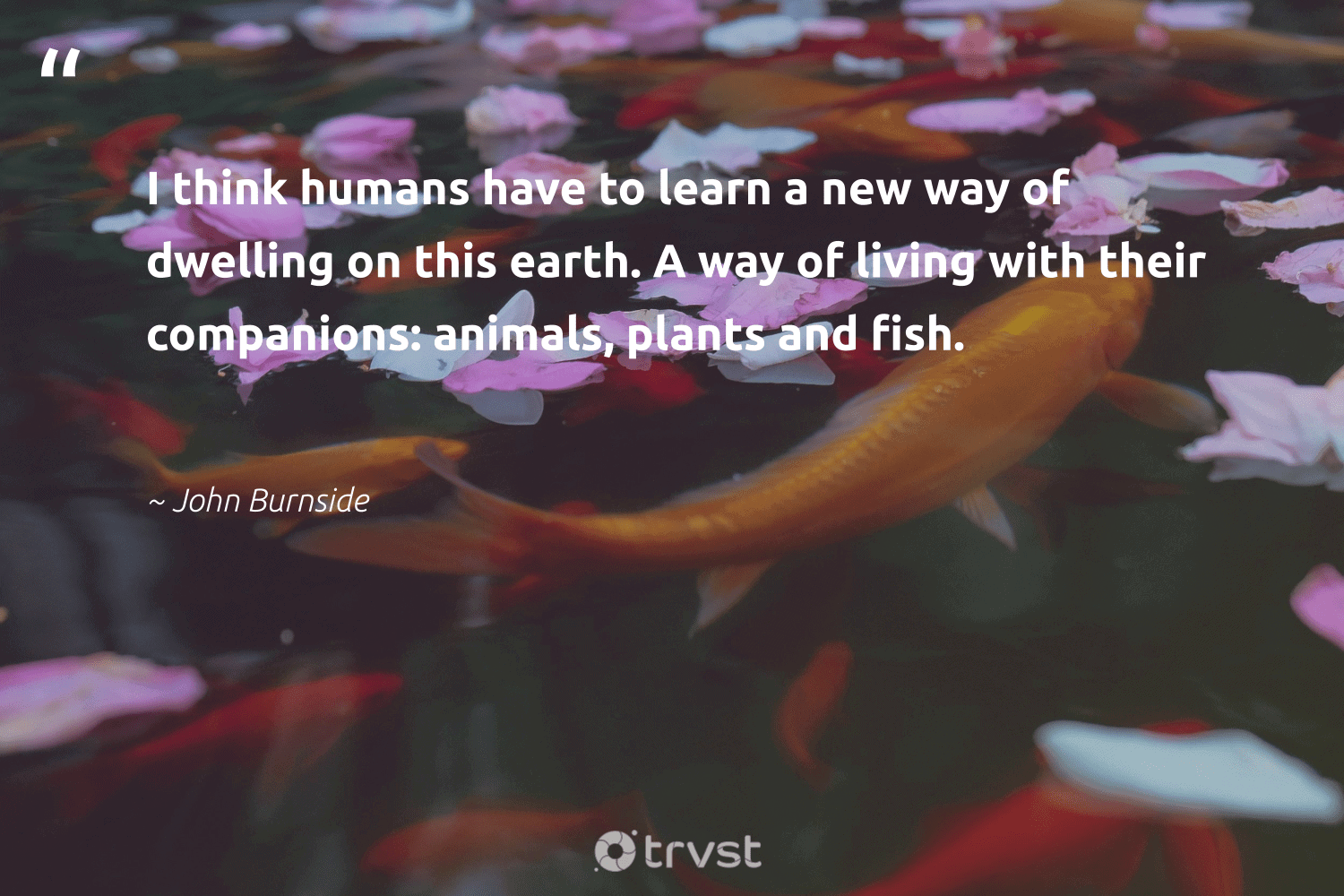 """""""I think humans have to learn a new way of dwelling on this earth. A way of living with their companions: animals, plants and fish.""""  - John Burnside #trvst #quotes #earth #fish #animals #mothernature #intheocean #green #socialchange #conservation #sustainability #climatechange"""