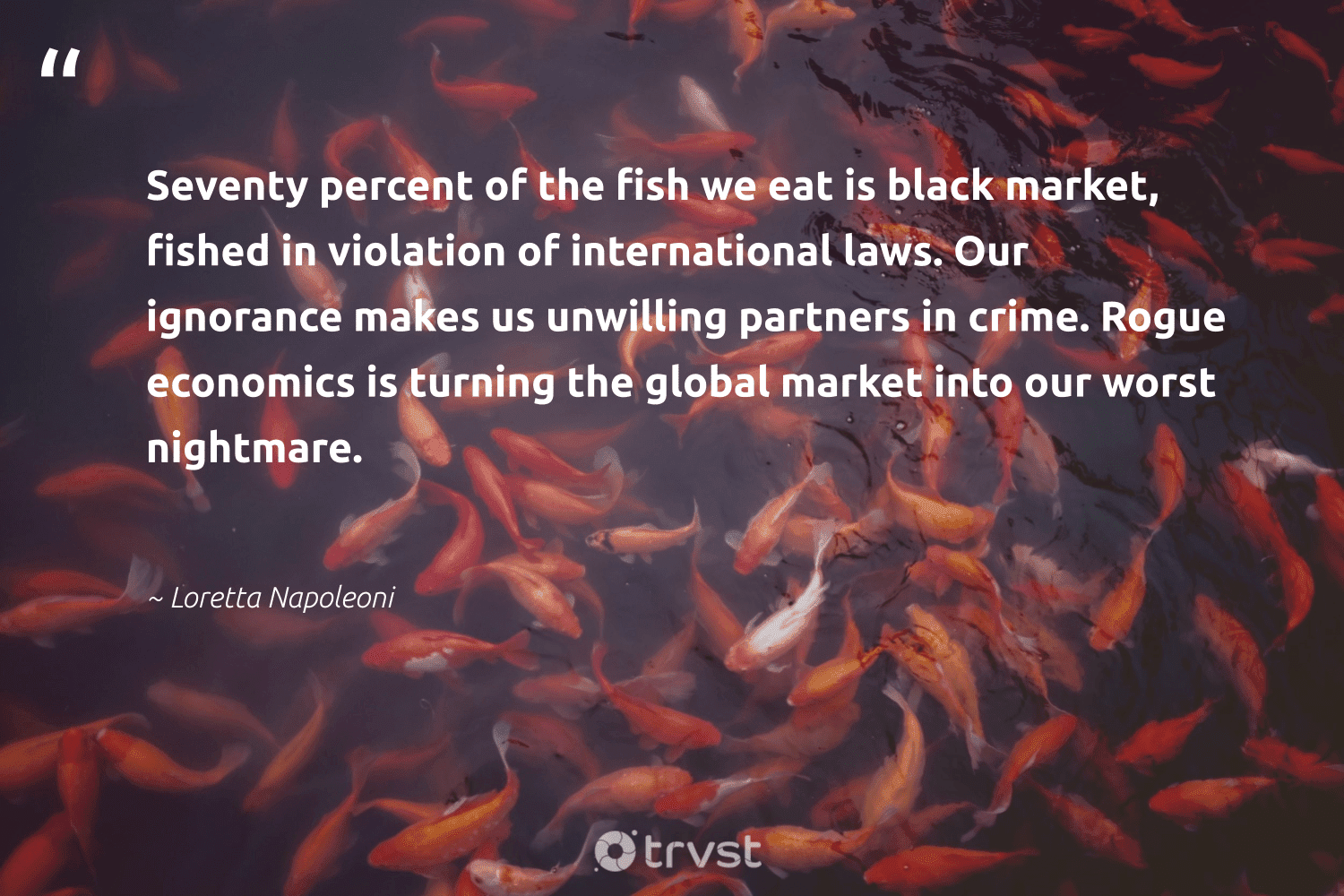 """""""Seventy percent of the fish we eat is black market, fished in violation of international laws. Our ignorance makes us unwilling partners in crime. Rogue economics is turning the global market into our worst nightmare.""""  - Loretta Napoleoni #trvst #quotes #economics #fish #protecttheoceans #bethechange #oceanlove #gogreen #protectnature #thinkgreen #nature #impact"""
