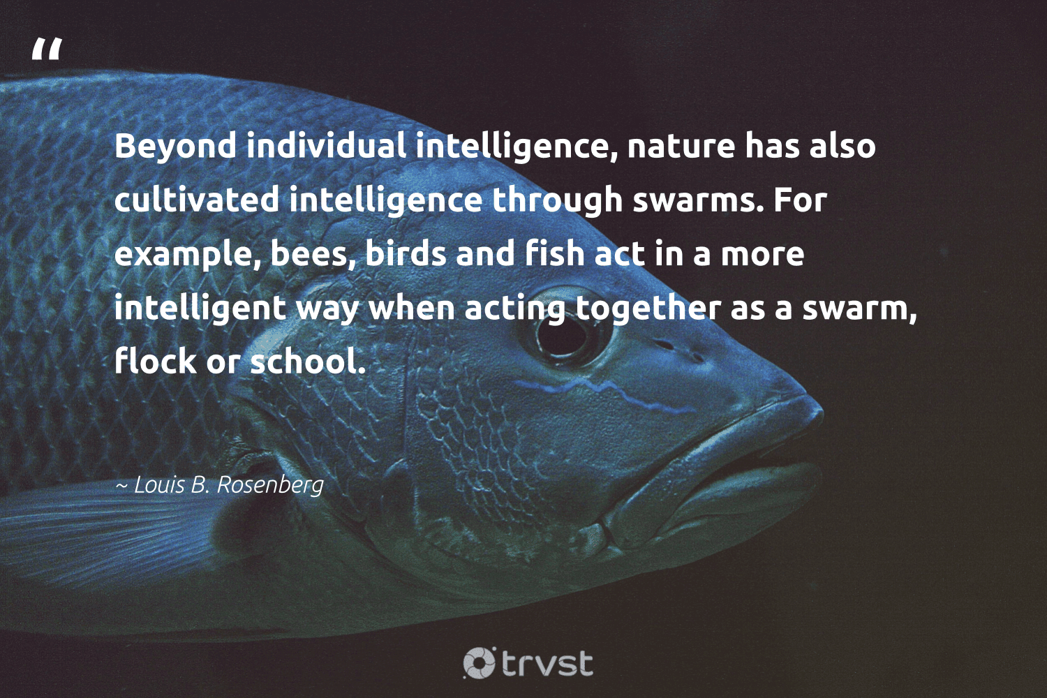"""""""Beyond individual intelligence, nature has also cultivated intelligence through swarms. For example, bees, birds and fish act in a more intelligent way when acting together as a swarm, flock or school.""""  - Louis B. Rosenberg #trvst #quotes #nature #fish #birds #bees #earth #amazingworld #gogreen #bethechange #environment #savetheoceans"""
