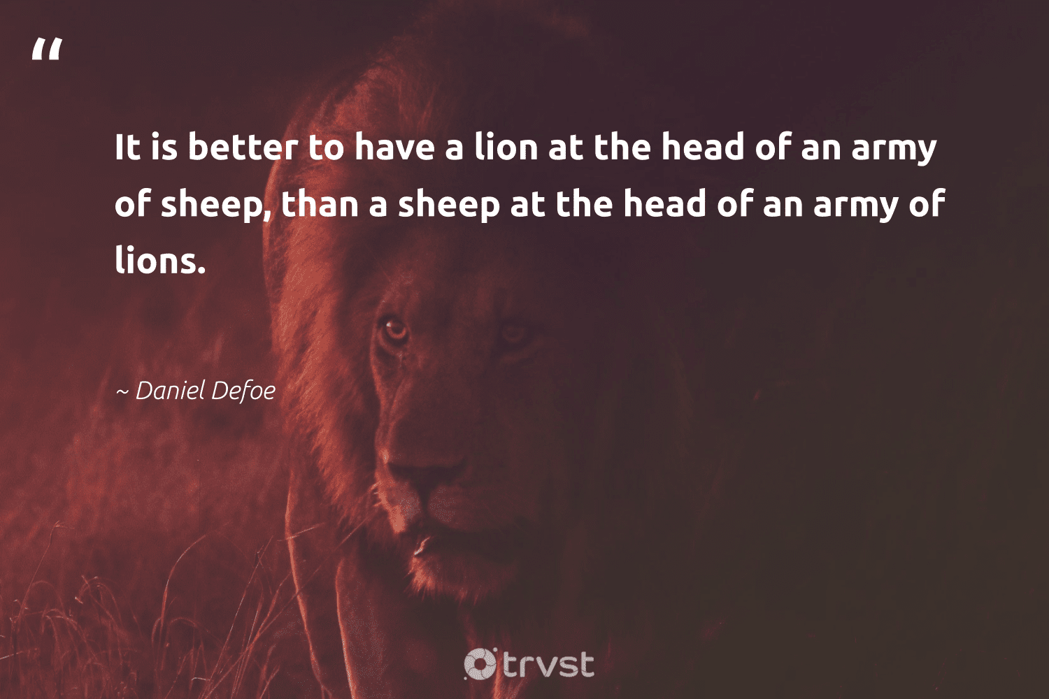 """""""It is better to have a lion at the head of an army of sheep, than a sheep at the head of an army of lions.""""  - Daniel Defoe #trvst #quotes #lion #lions #big5 #dogood #biodiversity #gogreen #perfectnature #ecoconscious #sustainability #socialimpact"""