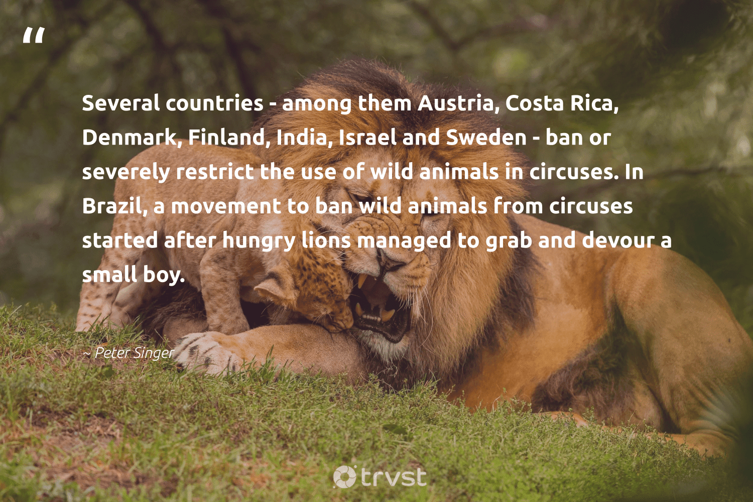 """""""Several countries - among them Austria, Costa Rica, Denmark, Finland, India, Israel and Sweden - ban or severely restrict the use of wild animals in circuses. In Brazil, a movement to ban wild animals from circuses started after hungry lions managed to grab and devour a small boy.""""  - Peter Singer #trvst #quotes #costarica #india #animals #hungry #wild #lions #wildlife #nature #geology #dosomething"""