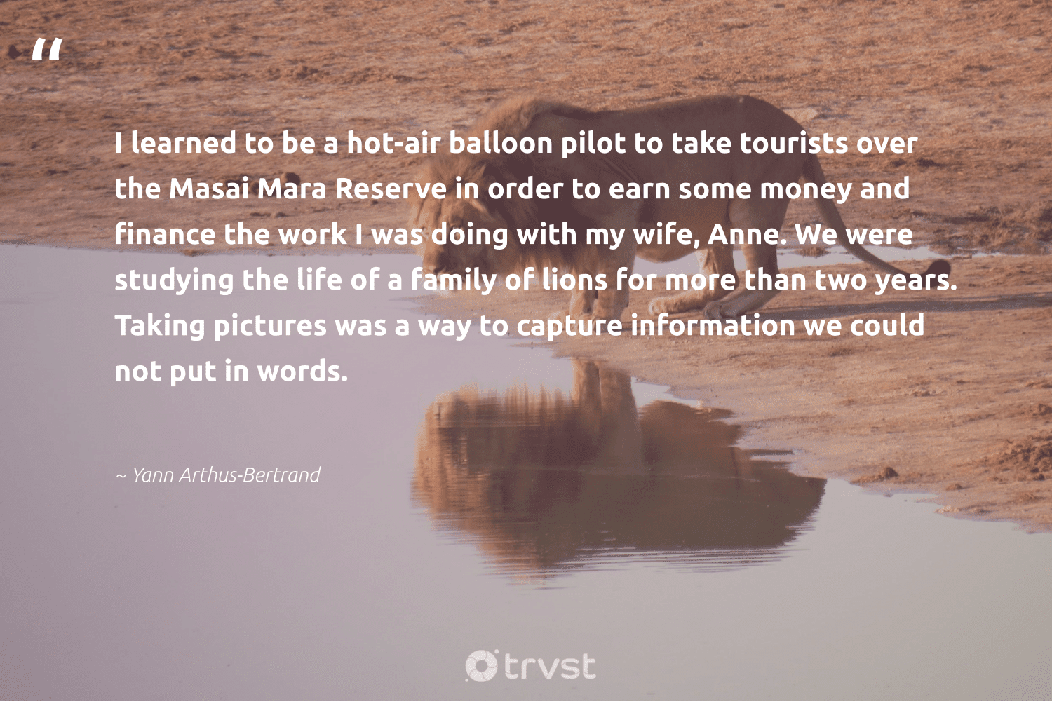 """""""I learned to be a hot-air balloon pilot to take tourists over the Masai Mara Reserve in order to earn some money and finance the work I was doing with my wife, Anne. We were studying the life of a family of lions for more than two years. Taking pictures was a way to capture information we could not put in words.""""  - Yann Arthus-Bertrand #trvst #quotes #family #lions #bigcats #beinspired #lion #takeaction #nature #bethechange #perfectnature #socialchange"""