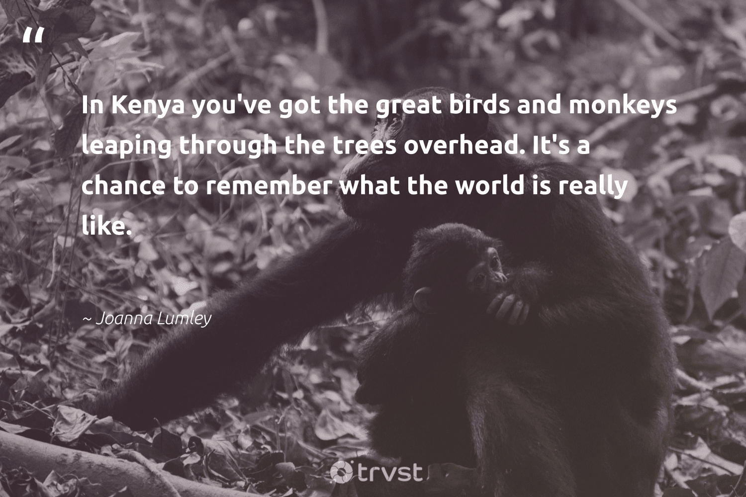 """In Kenya you've got the great birds and monkeys leaping through the trees overhead. It's a chance to remember what the world is really like.""  - Joanna Lumley #trvst #quotes #trees #birds #monkeys #forest #protectnature #natureseekers #impact #arborarmy #majesticwildlife #earth"