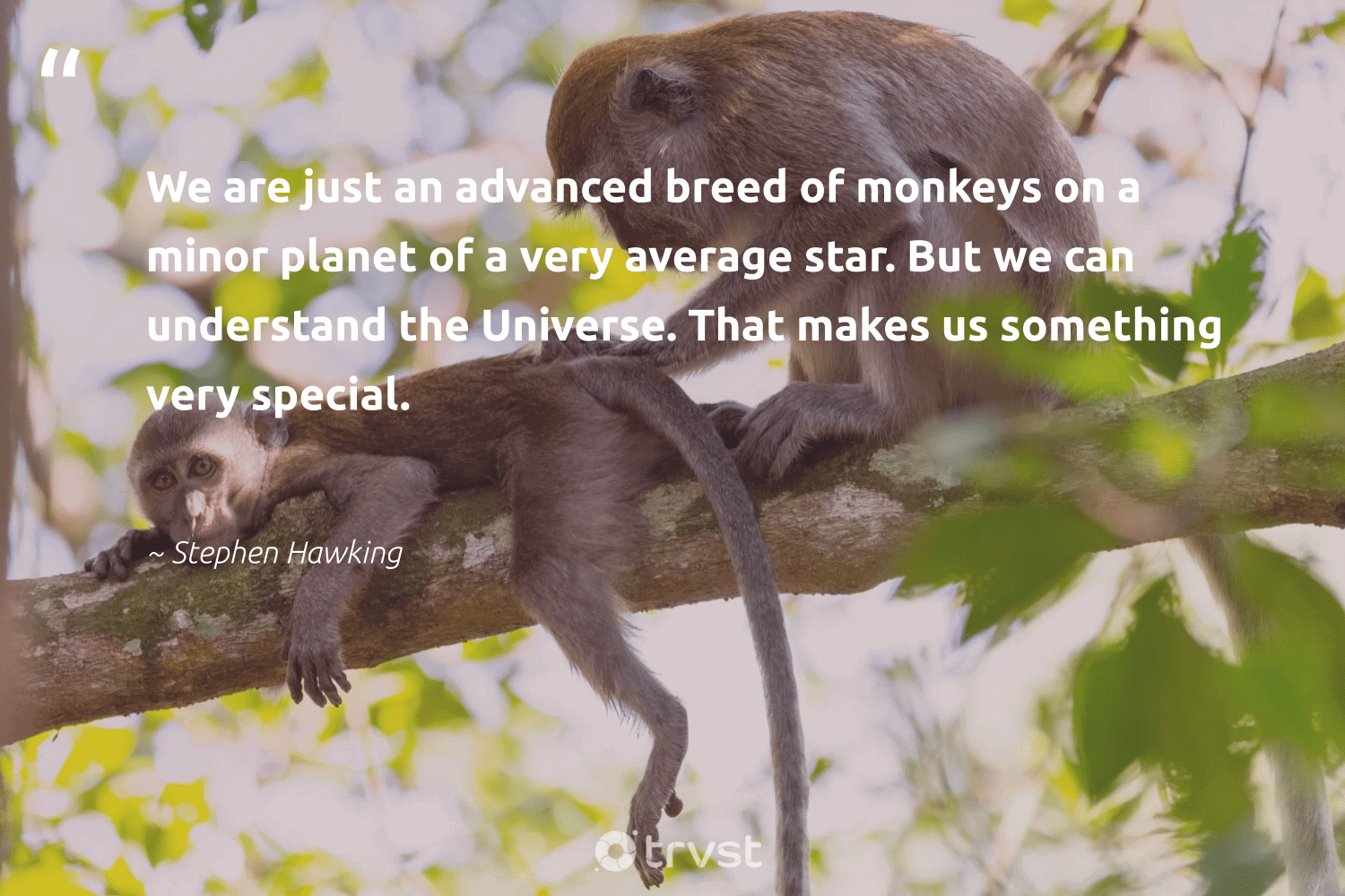 """""""We are just an advanced breed of monkeys on a minor planet of a very average star. But we can understand the Universe. That makes us something very special.""""  - Stephen Hawking #trvst #quotes #planet #monkeys #earth #monkey #sustainability #beinspired #environment #monkeylife #wildlifeplanet #thinkgreen"""