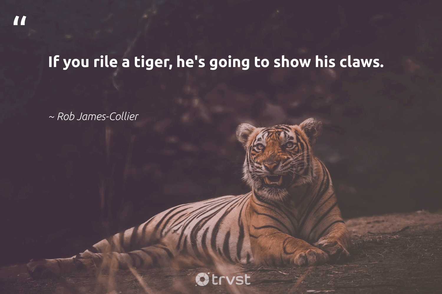 """If you rile a tiger, he's going to show his claws.""  - Rob James-Collier #trvst #quotes #tiger #amazingworld #bethechange #animalphotography #impact #wildlifeprotection #planetearthfirst #sustainability #socialchange #perfectnature"