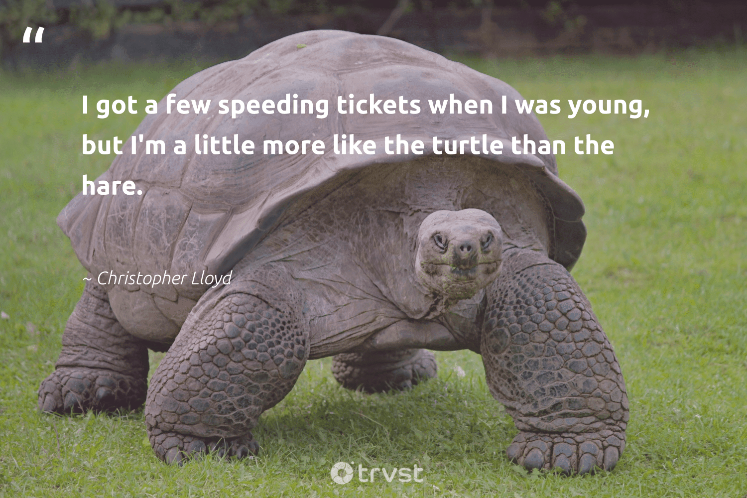 """I got a few speeding tickets when I was young, but I'm a little more like the turtle than the hare.""  - Christopher Lloyd #trvst #quotes #turtle #perfectnature #impact #sustainability #gogreen #protectnature #changetheworld #aquaticlife #planetearthfirst #oceans"