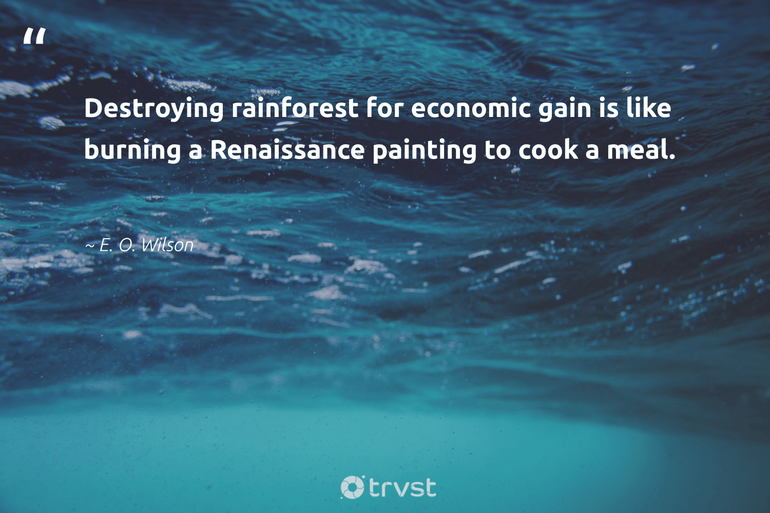 """Destroying rainforest for economic gain is like burning a Renaissance painting to cook a meal.""  - E. O. Wilson #trvst #quotes #green #beinspired #ecofriendly #socialchange #sustainability #impact #getoutside #changetheworld #naturelovers #socialimpact"
