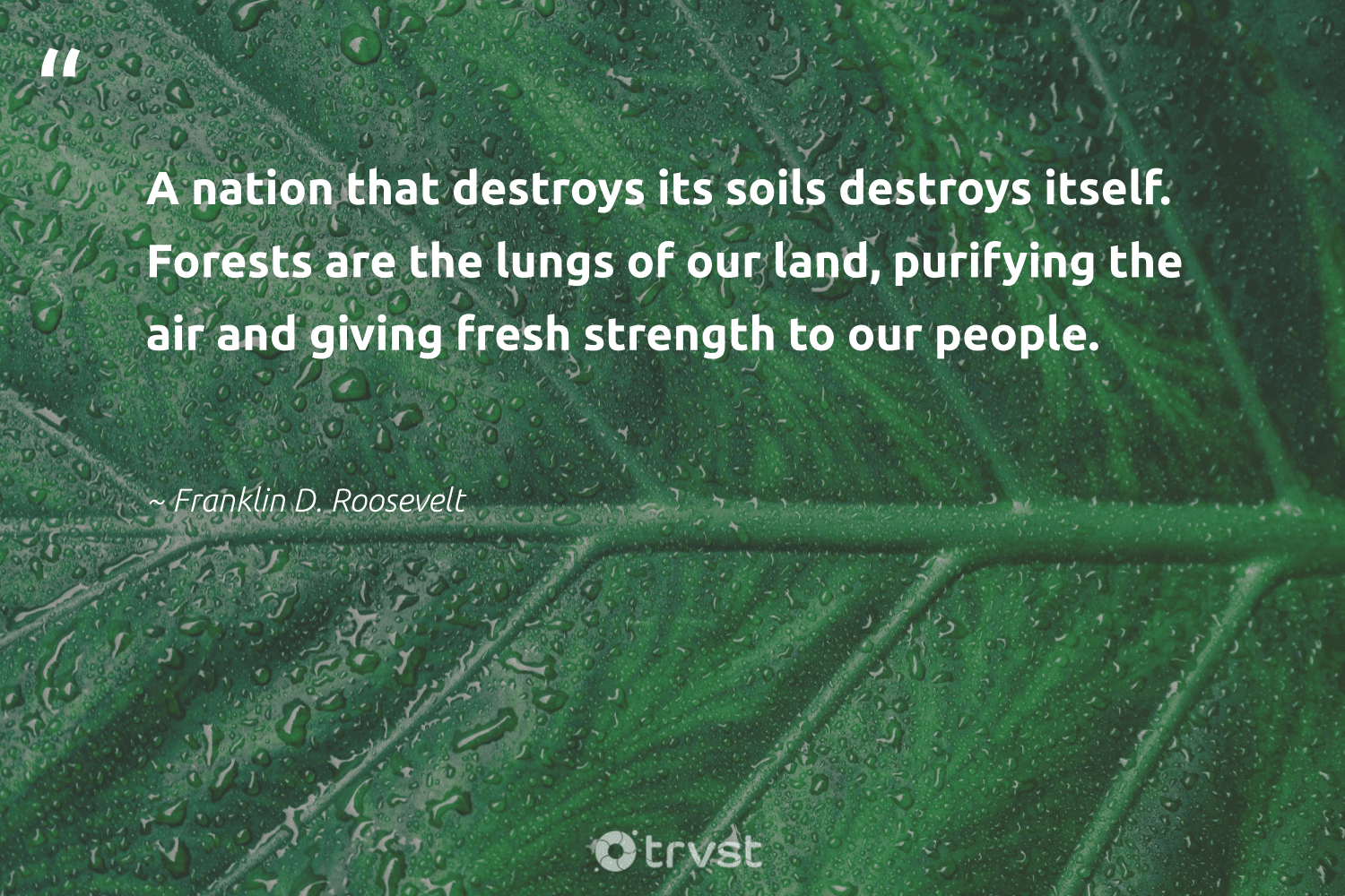 """A nation that destroys its soils destroys itself. Forests are the lungs of our land, purifying the air and giving fresh strength to our people.""  - Franklin D. Roosevelt #trvst #quotes #volunteer #dosomething #giveback #thinkgreen #sustainability #beinspired #eco #gogreen #getoutside #ecoconscious"
