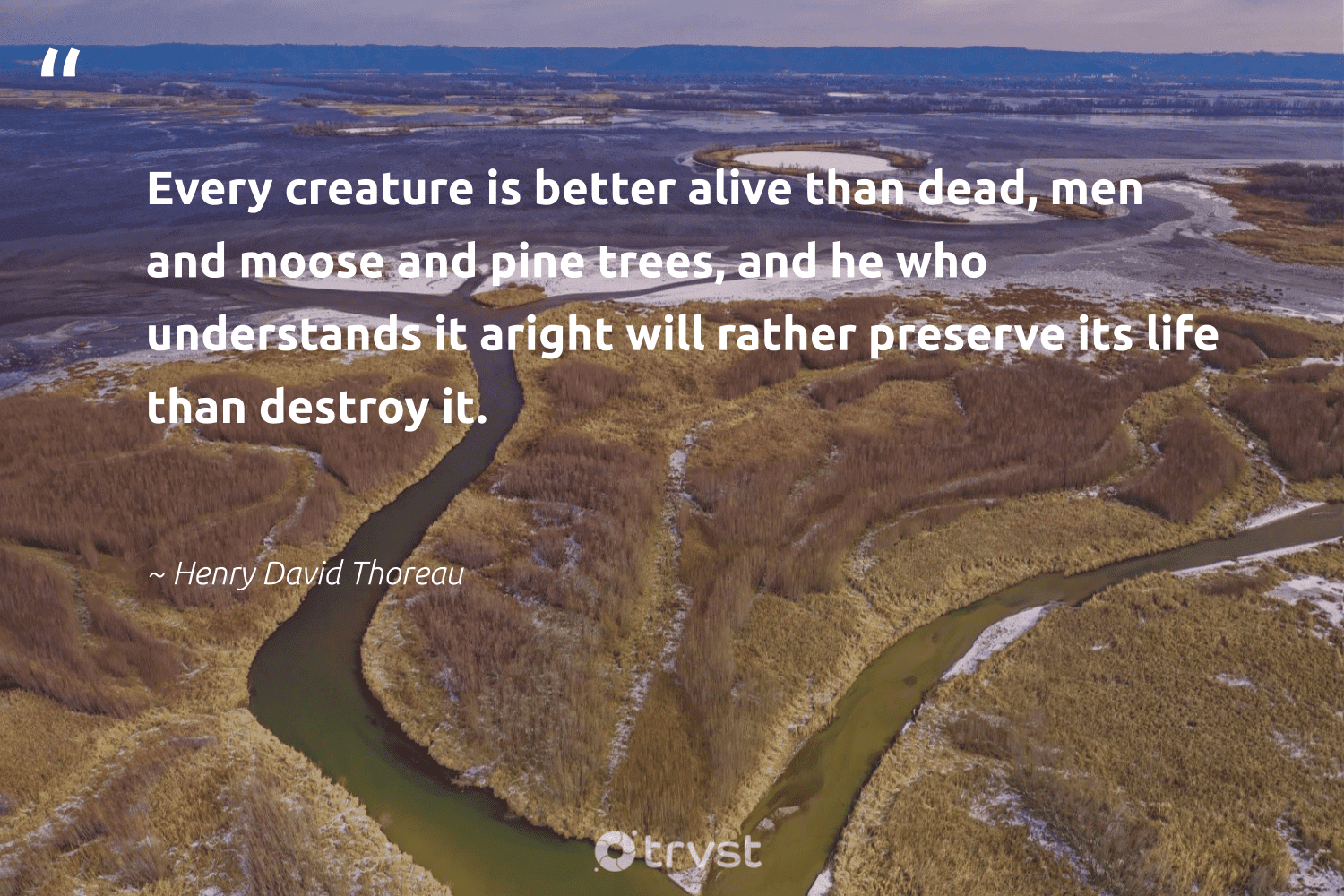 """Every creature is better alive than dead, men and moose and pine trees, and he who understands it aright will rather preserve its life than destroy it.""  - Henry David Thoreau #trvst #quotes #deforestation #trees #plantatree #wildernessnation #ecofriendly #dotherightthing #rainforest #environmentallyfriendly #green #beinspired"