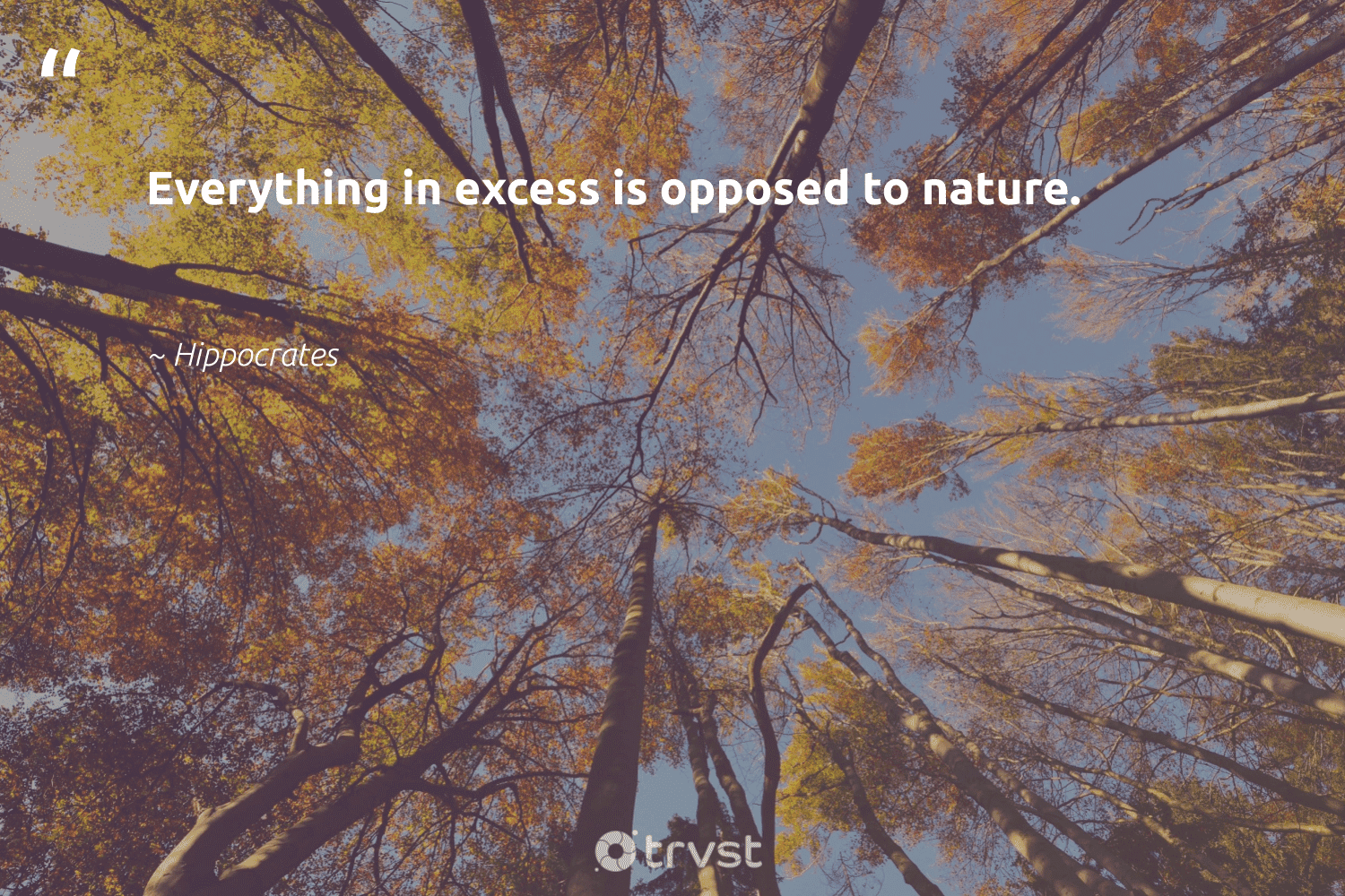 """""""Everything in excess is opposed to nature.""""  - Hippocrates #trvst #quotes #environment #nature #planet #gogreen #ecofriendly #takeaction #conservation #giveback #earth #changetheworld"""