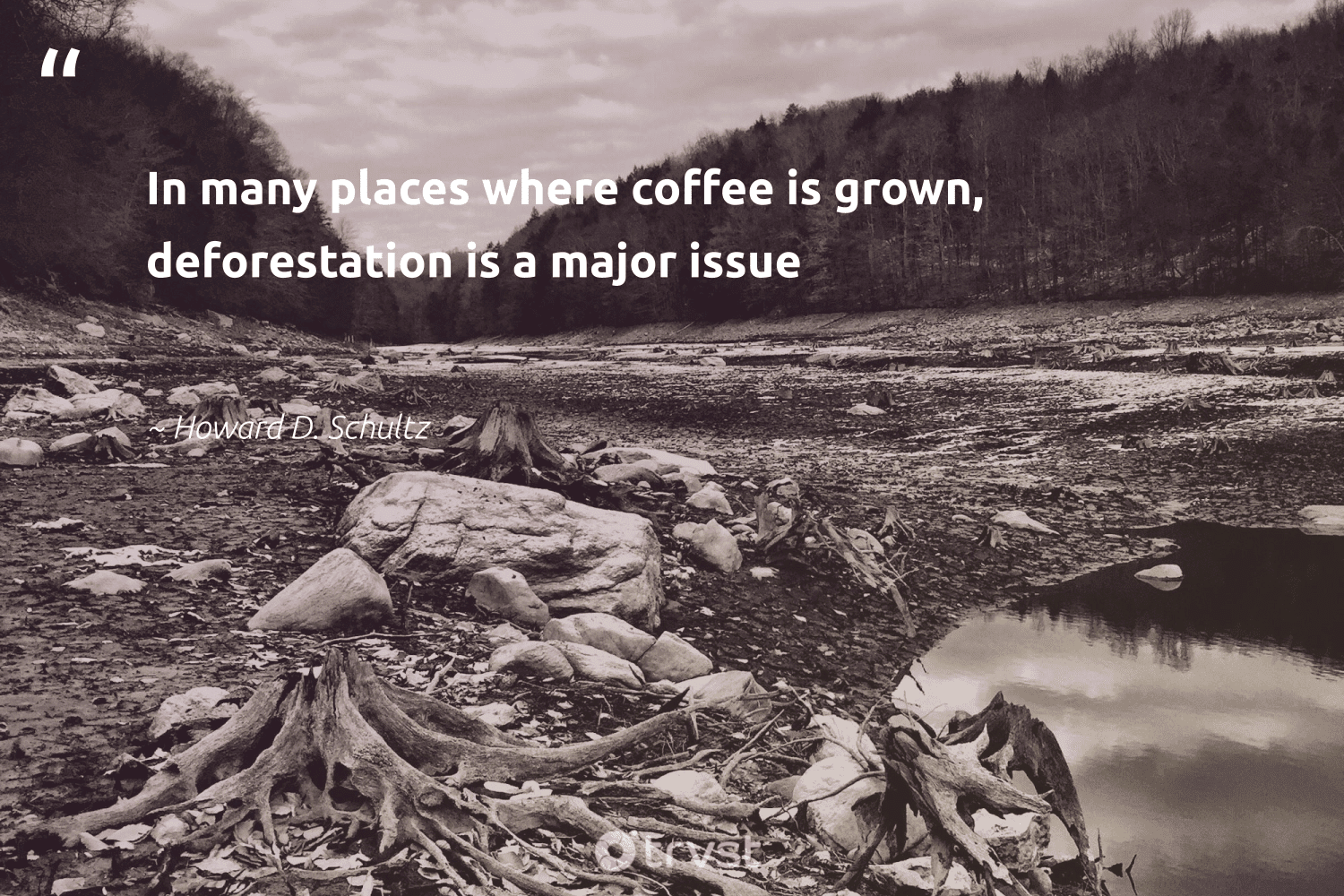 """In many places where coffee is grown, deforestation is a major issue""  - Howard D. Schultz #trvst #quotes"